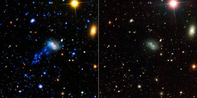 NASA's Galaxy Evolution Explorer found a tail behind a galaxy called IC 3418. The star-studded tail can be seen on the left, as detected by the space telescope in ultraviolet light. The tail has escaped detection in visible light, as shown by the image on the right, taken by a visible-light telescope on the ground. This tail was created as the galaxy plunged into gas in a family of galaxies known as the Virgo cluster. The image on the left is a composite of data from the Galaxy Evolution Explorer (far-ultraviolet light is dark blue and near-ultraviolet light is light blue); and the Sloan Digital Sky Survey (visible light is colored green and red). The image on the right is from the Sloan Digital Sky Survey. Other galaxies and stars can be seen scattered throughout the image. Another galaxy called IC 3413, which is part of the Virgo cluster, can be seen to the right of IC 3418 as an oval-shaped blob. The bright large dot at upper right is a star in our Milky Way galaxy. Image Credit: NASA/JPL-Caltech