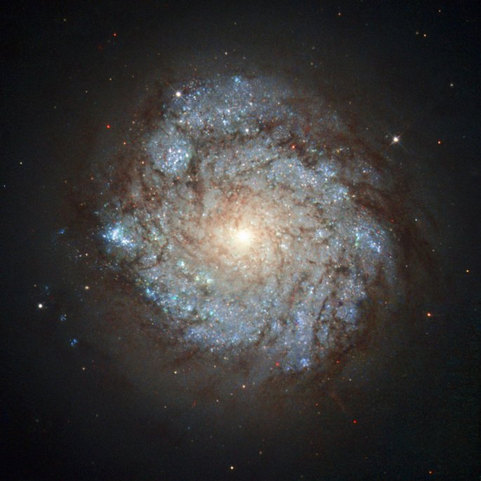 This image, taken by the NASA/ESA Hubble Space Telescope's Wide Field Planetary Camera 2, shows a spiral galaxy named NGC 278. This cosmic beauty lies some 38 million light-years away in the northern constellation of Cassiopeia (The Seated Queen). While NGC 278 may look serene, it is anything but. The galaxy is currently undergoing an immense burst of star formation. This flurry of activity is shown by the unmistakable blue-hued knots speckling the galaxy's spiral arms, each of which marks a clump of hot newborn stars. However, NGC 278's star formation is somewhat unusual; it does not extend to the galaxy's outer edges, but is only taking place within an inner ring some 6500 light-years across. This two-tiered structure is visible in this image — while the galaxy's centre is bright, its extremities are much darker. This odd configuration is thought to have been caused by a merger with a smaller, gas-rich galaxy — while the turbulent event ignited the centre of NGC 278, the dusty remains of the small snack then dispersed into the galaxy's outer regions. Whatever the cause, such a ring of star formation, called a nuclear ring, is extremely unusual in galaxies without a bar at their centre, making NGC 278 a very intriguing sight.